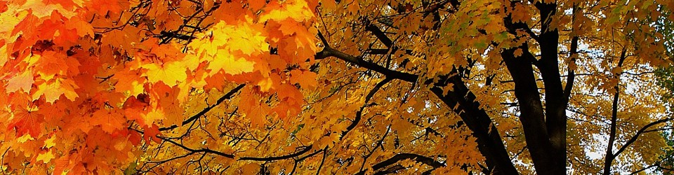 [trees in beautiful fall colours]
